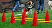 Pfoten-Schule Junghunde 003