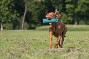Hundeschule Dummytraining