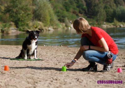 Pfoten-Schule  Crossdogging