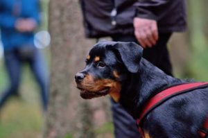 Hundeschule Buxtehude Junghunde