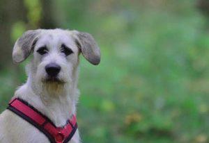 Hundeschule Buchholz Fortgeschrittene